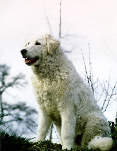 branco2